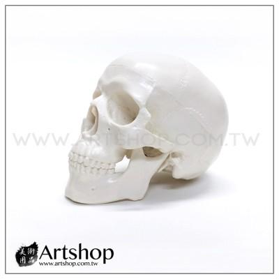 藝用人體解剖模型 1:2 骷髏頭 頭骨素體白胚