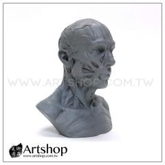 藝用人體解剖模型 1:3 肌肉半胸像 (灰色)