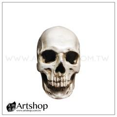 藝用人體骷顱模型 1:1 頭骨 骷顱頭