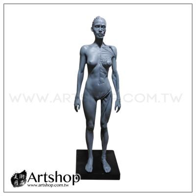 藝用人體解剖模型 1:6 女性素體 皮膚+肌肉 (灰色)
